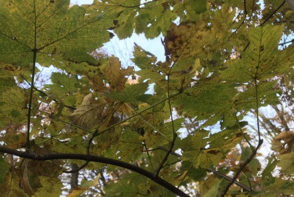 Wat we kunnen leren van de herfst